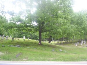 Large Tree in Graveyard